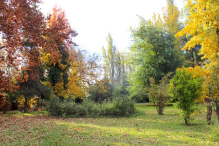 jardin añoso